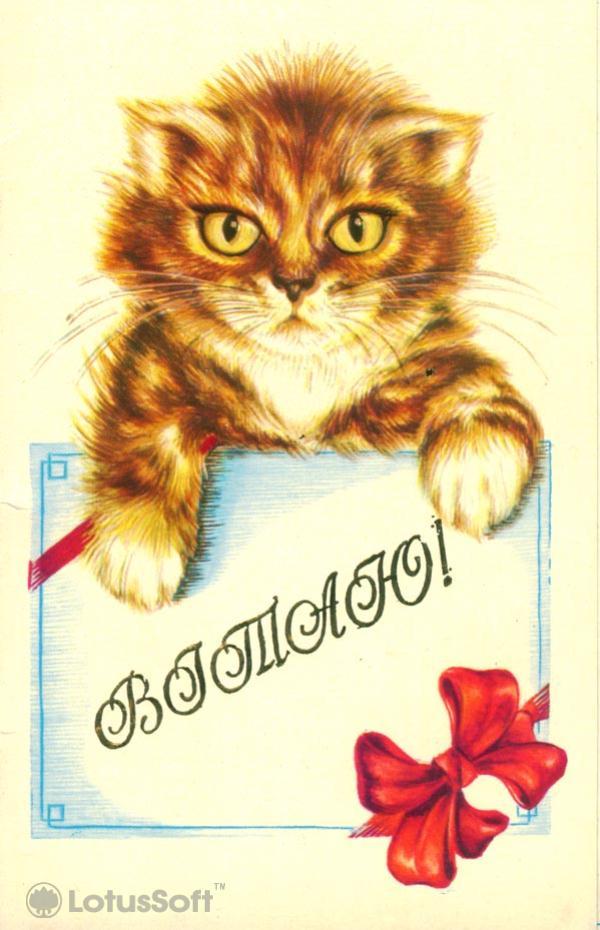 Vitayu, 1986