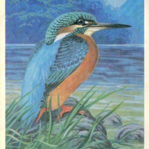 Kingfisher, 1984