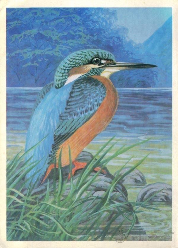 Зимородок, 1984 год