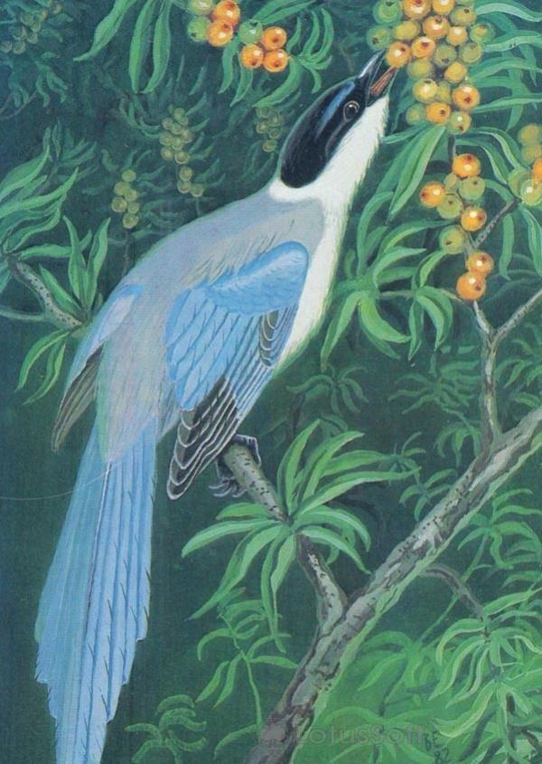 Голубая сорока, 1984 год