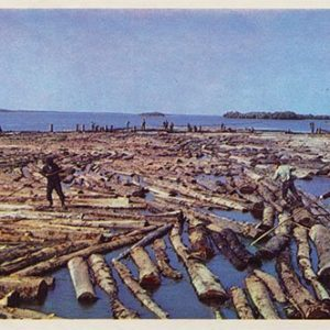 A bunch of rafts. Nanai District, 1975