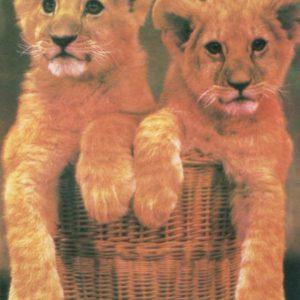 Cubs, 1985