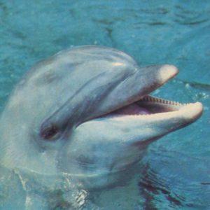 Dolphin, 1985