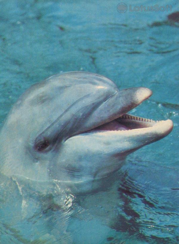 Дельфин, 1985 год