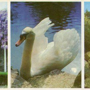 Fountain of Tears. Alupka Palace-Museum. Crimea, 1983