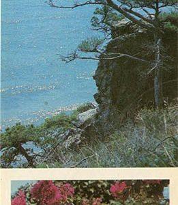 """Уголок государственного заповедника """"Мыс Мартьян"""". Никитский ботанический сад, 1986 год"""
