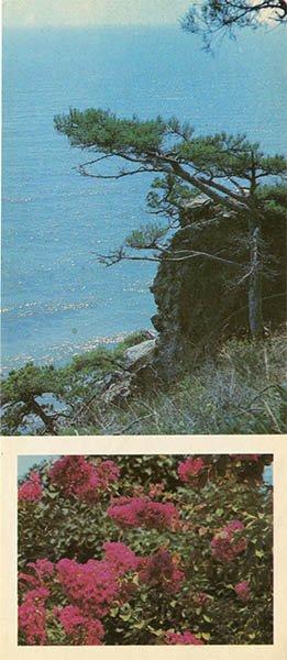 "Corner State Reserve ""Cape Marian."" Nikita Botanical Garden, 1986"