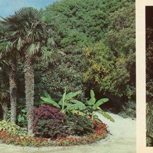 Palm alley in the Lower Park. Nikita Botanical Garden, 1986