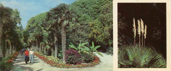 Пальмовая аллея в Нижнем парке. Никитский ботанический сад, 1986 год