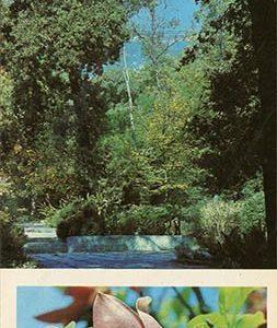 Corner Montedor Park. Nikita Botanical Garden, 1986
