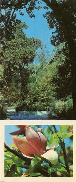Уголок парка Монтедор. Никитский ботанический сад, 1986 год