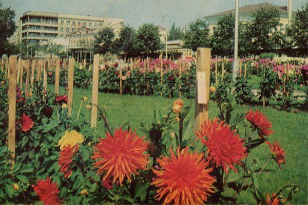 """Сквер имени """"Революции"""" у гостиницы Центральная. Иваново, 1967 год"""