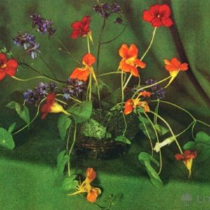 Композииция из цветов, 1974 год