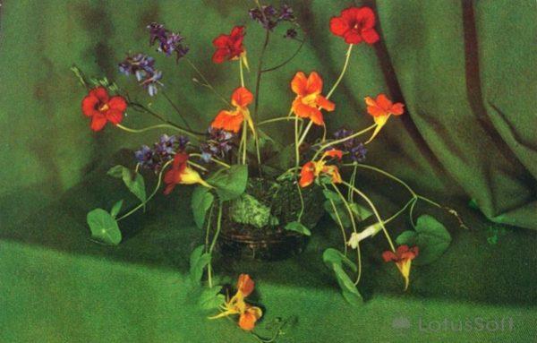 Kompoziitsiya of flowers, 1974
