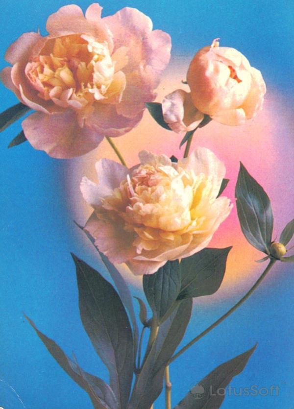 Kompoziitsiya of flowers, 1982