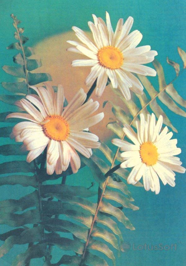 Композииция из цветов, 1982 год