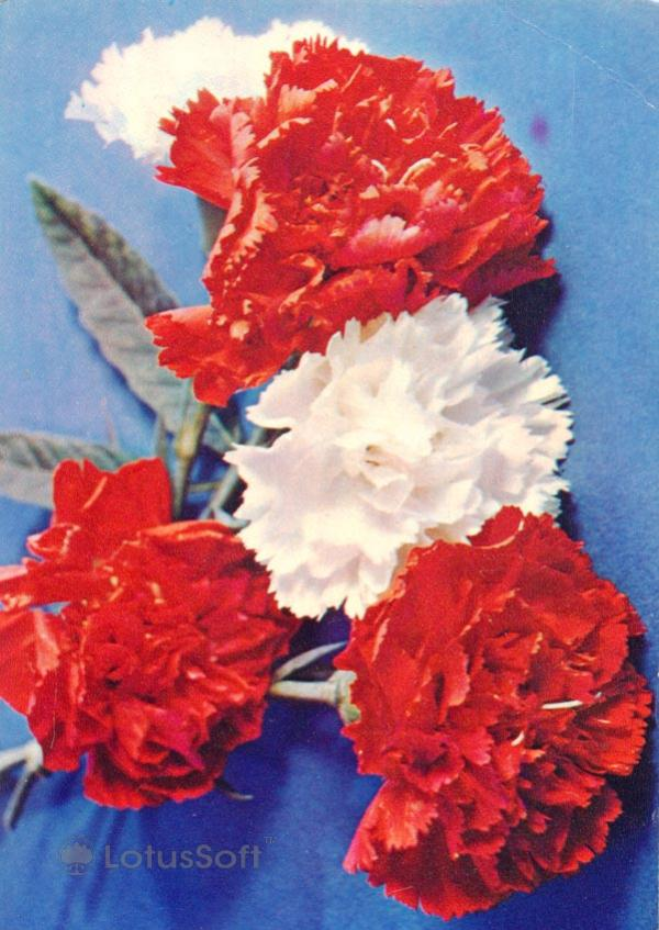 Kompoziitsiya of flowers, 1985
