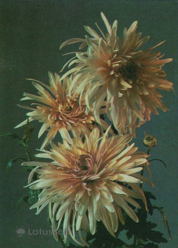 Kompoziitsiya of flowers, 1984