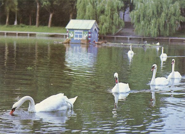 Лебединое озеро, Астрахань, 1982 год