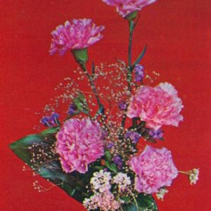 Carnations, 1984