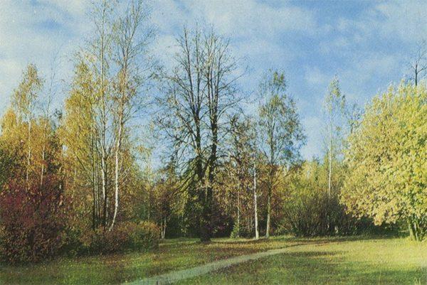 Английская дорога в районе Белой березы, Павловский парк, 1970 год