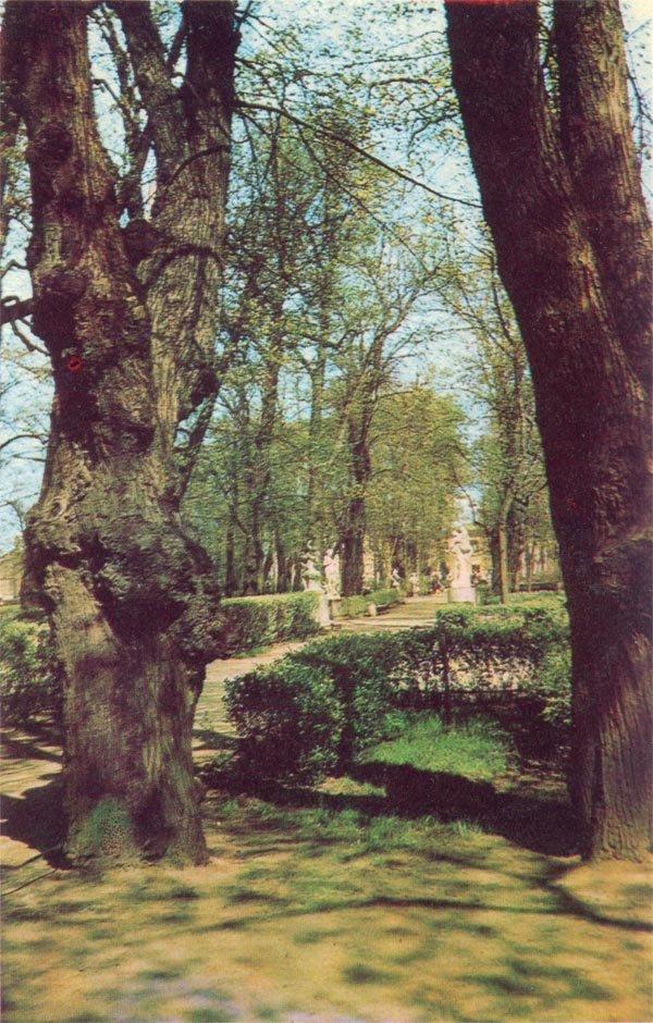 Summer garden. Old trees, 1971