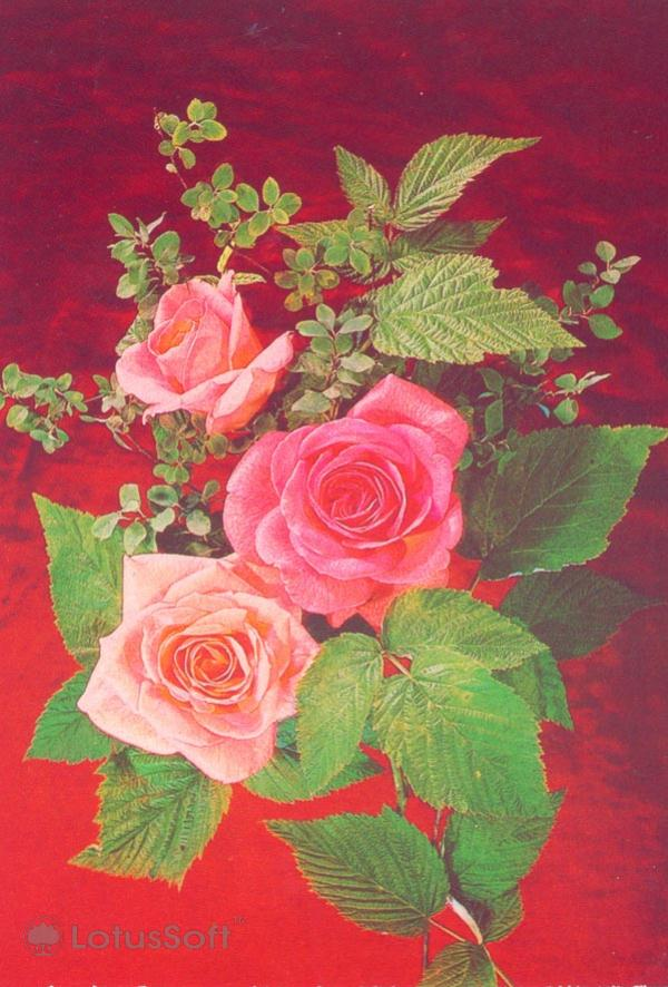 Arrangement of Roses, 1987