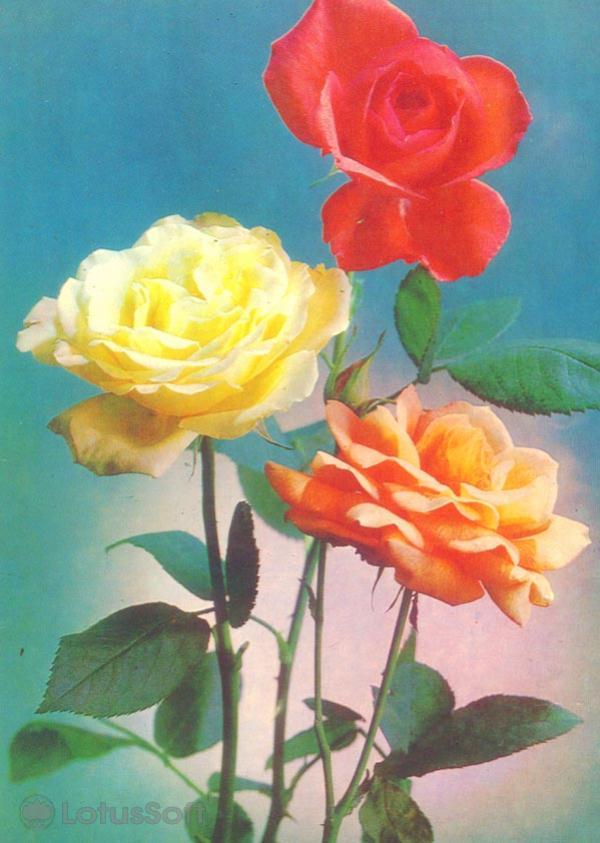 Kompoziitsiya of flowers, 1983
