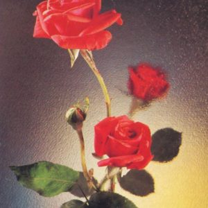 Roses, 1984