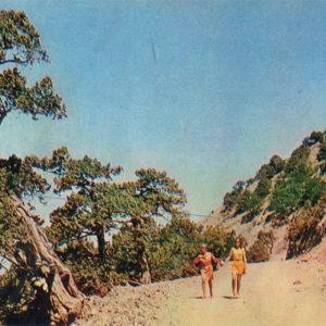 Долина Сукко. Дорога к роднику, Анапа, 1973 год