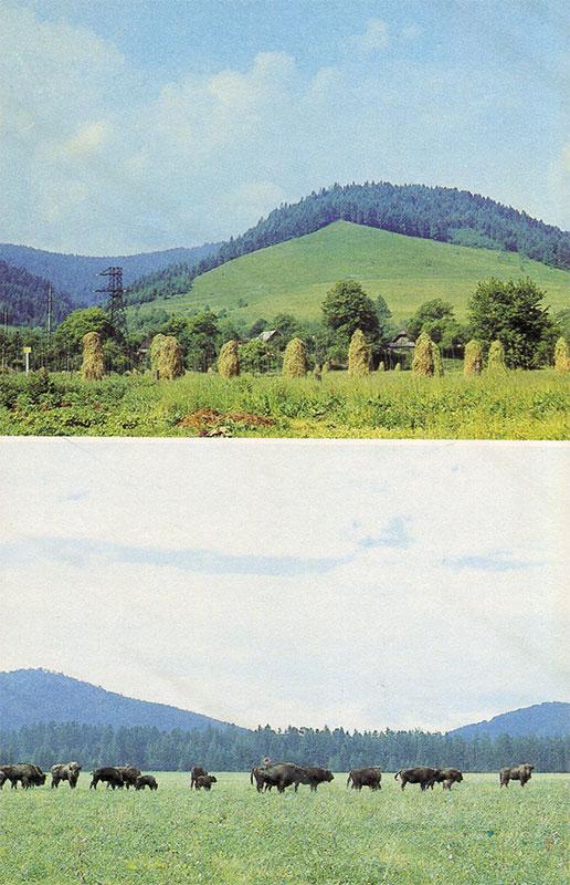 Карпатский заповедник, Яремча, 1990 год