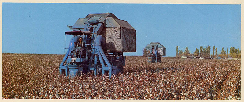In the cotton fields for Tajikistan, 1974
