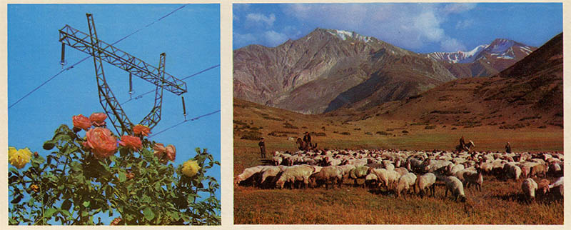 Grazing yaks in the Eastern Pamirs, for Tajikistan in 1974