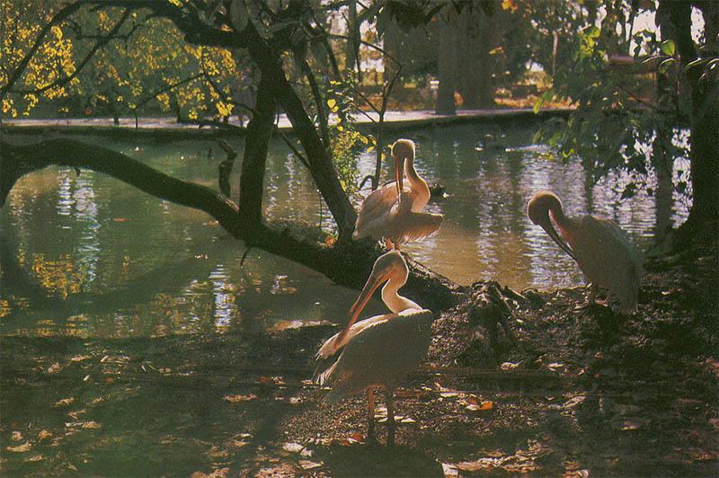 В парке, Гагра, 1983 год